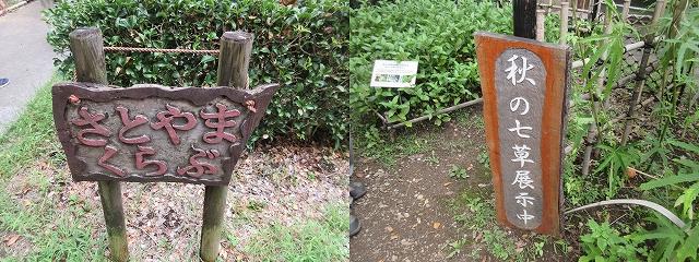 桜ヶ丘公園の「さとやまくらぶ」  秋の七草展示中、こちらで七草全て見られました。
