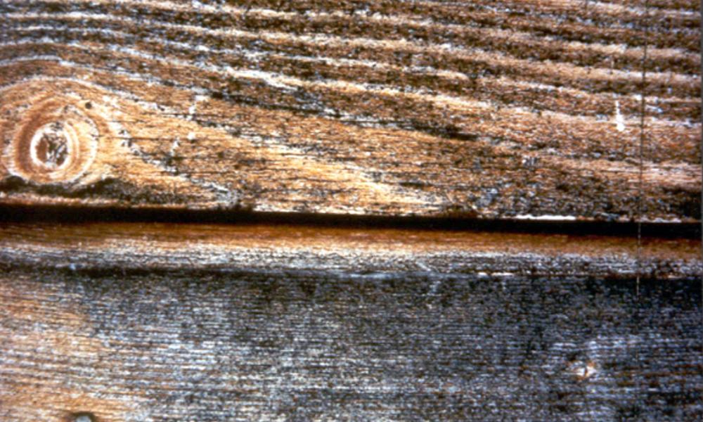 Holz vorher