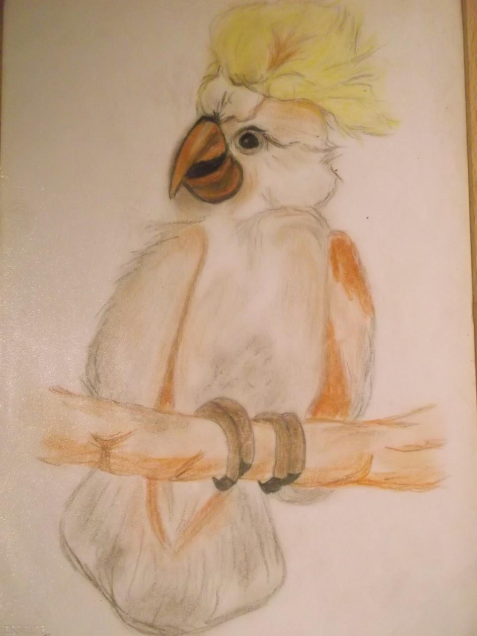 Mein Kakadu Acrylpapier