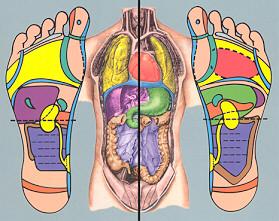 Mapa Reflexologia Podal Pdf.Reflexologia Podal Pagina Web De Saludactiva