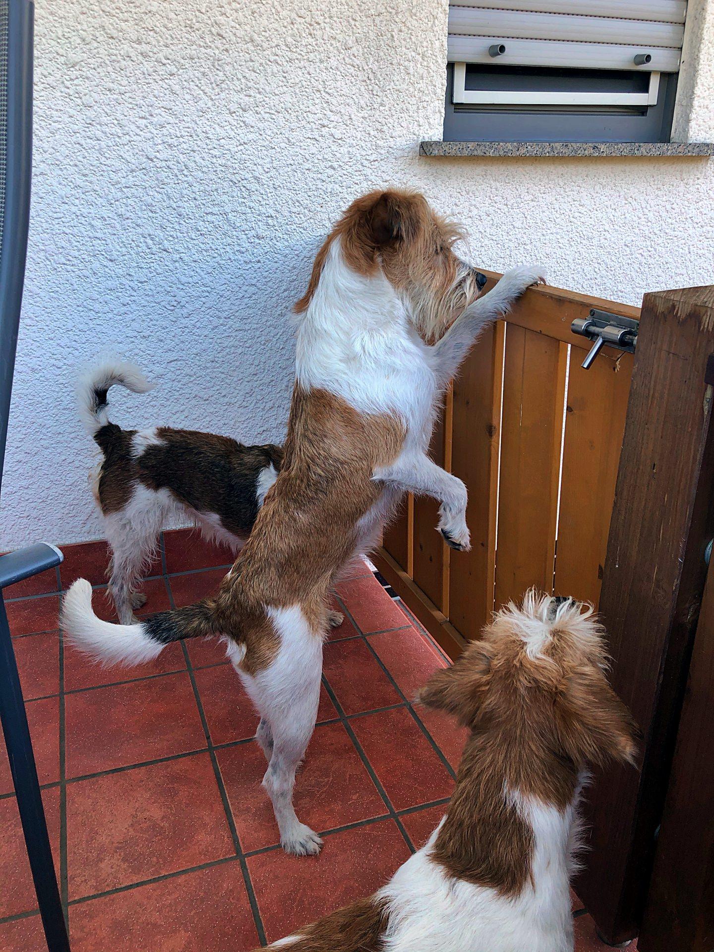 Lissu (hinten) & Kabou (vorne) fragen Fila: Was gibt's denn da zu sehen?