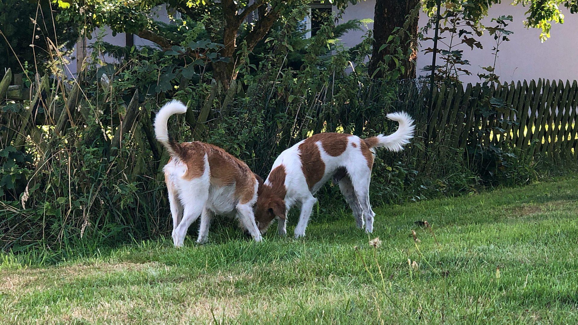 Fila & Kabou