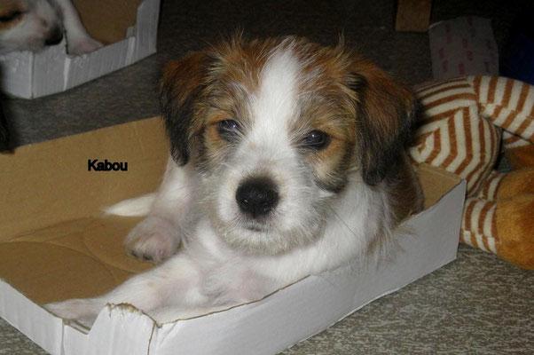 Kabou am 31.01.2013 - 8 Wochen