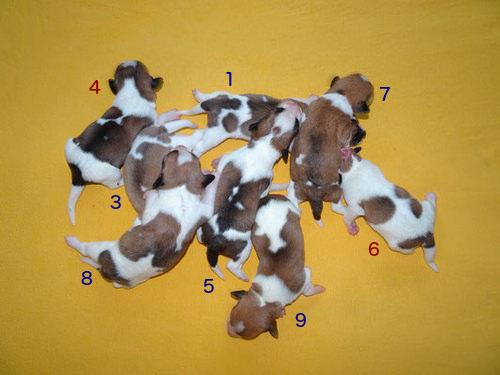 Gruppenfoto vom 26.11.2018: 1 = Cooper, 3 = Onni, 4 = Charlie, 5 = Cookie, 6 = Cara, 7 = Murmel, 8 = Chuko, 9 = Carlo