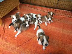 Onni, Cookie, Cooper, Charlie, Chara, Carlo, Captain Murmel & vorne Chuko