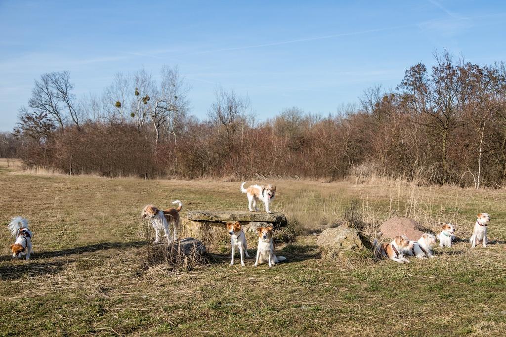 Gruppenfoto vom 59. Kromi-Spaziergang in Braunschweig am 17.02.2019