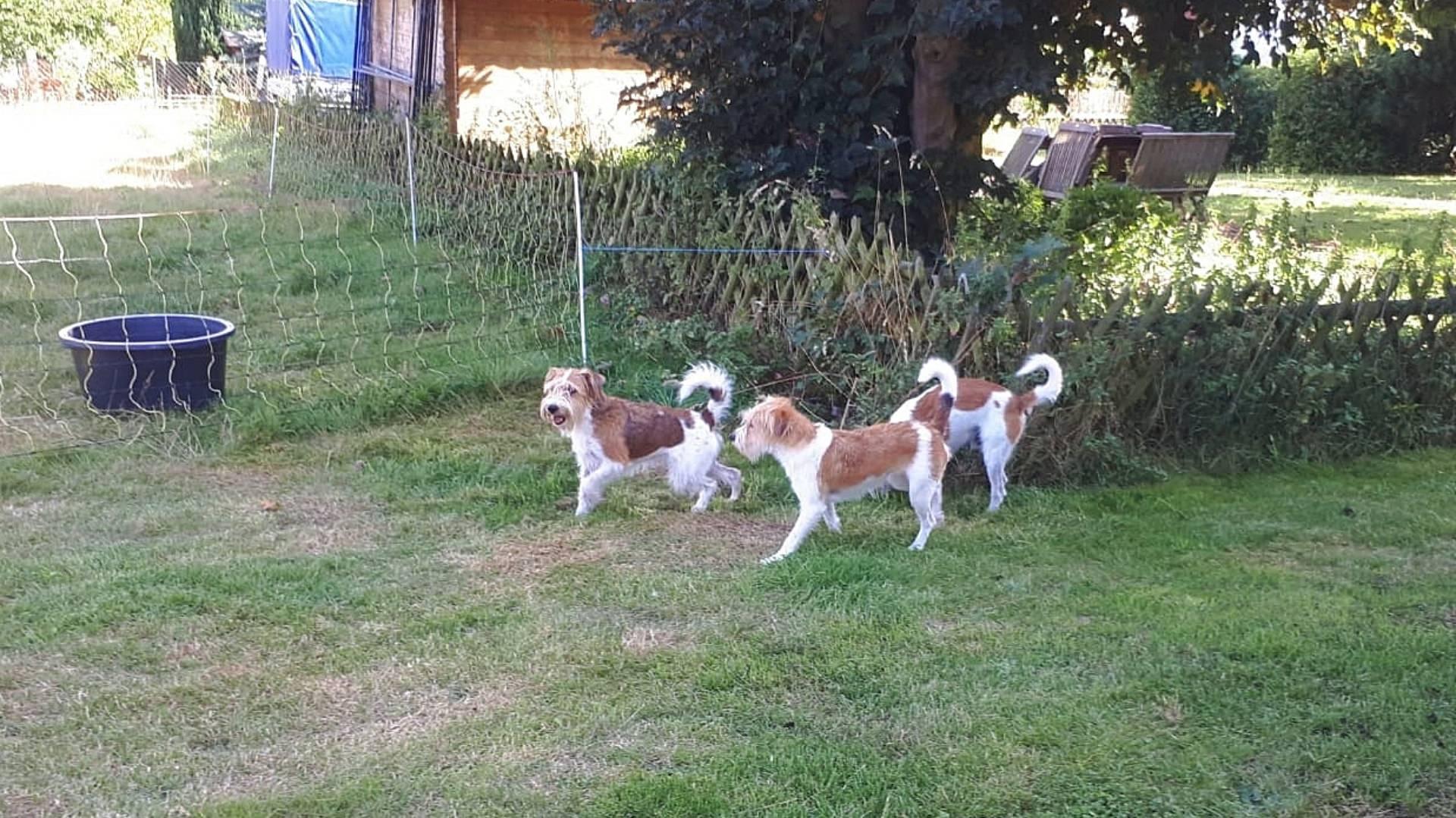Lissu, Fila & Kabou
