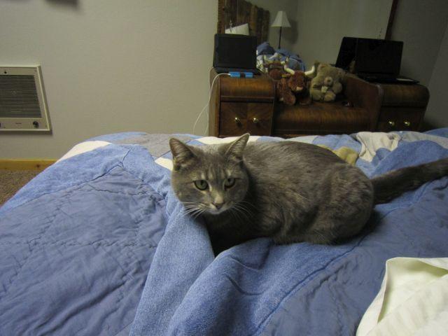 Cathrines Miezekatze, die gerne in unserem Bett gelegen ist