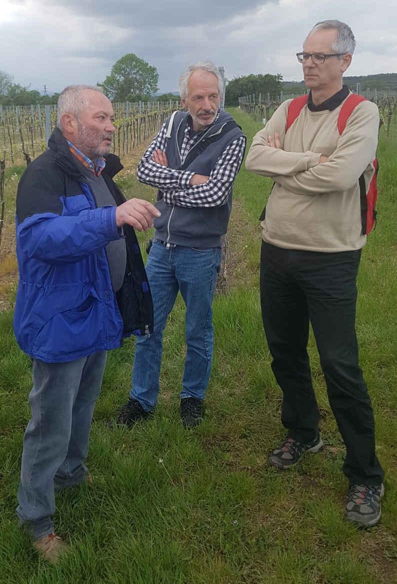 Biowinzer Alfred Paradeiser im Gespräch mit Michael Lambert und Markus Ullmann von der Vinophorie