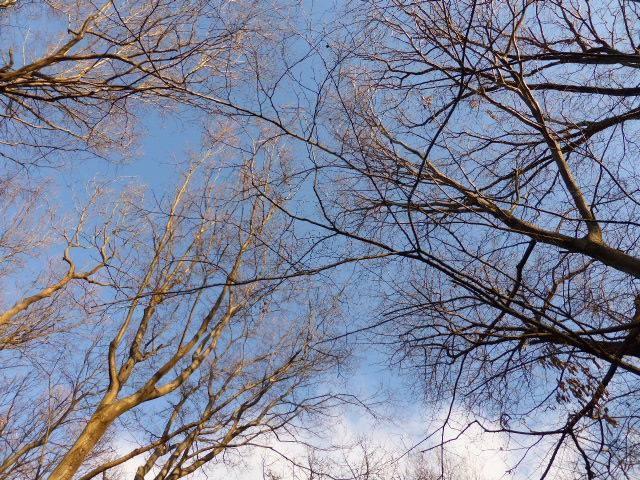 落ち葉の布団から見た秋の空