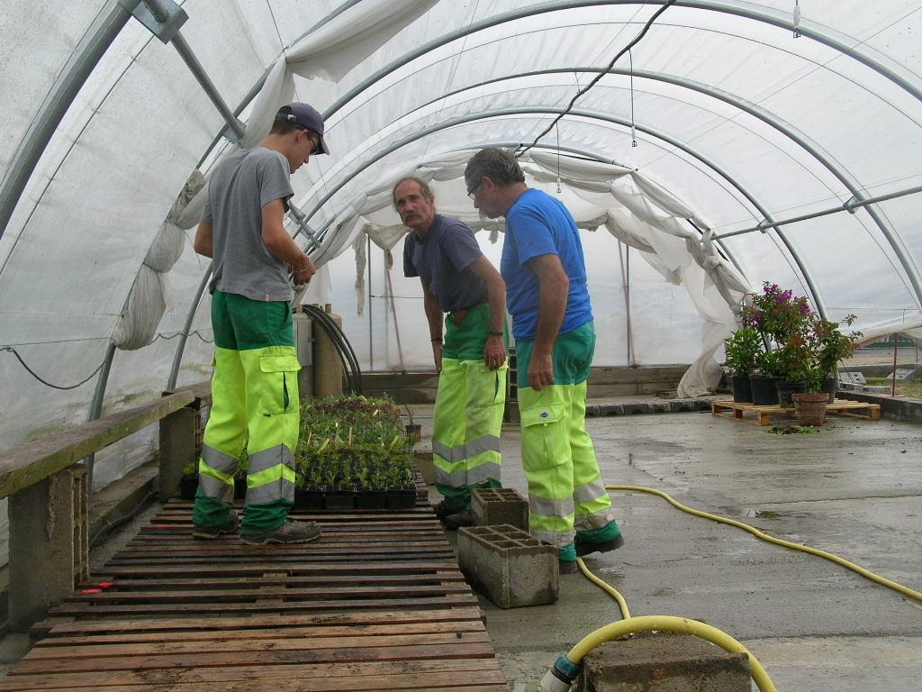 Réalisation des boutures (2 600) dans la serre pour le fleurissement de la saison 2012