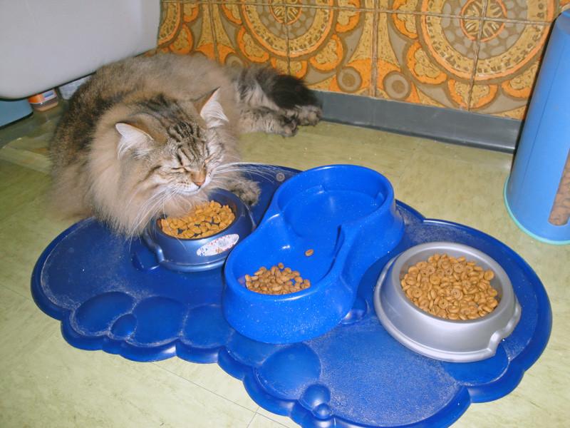 Essen ist ja sooooooooo anstrengend
