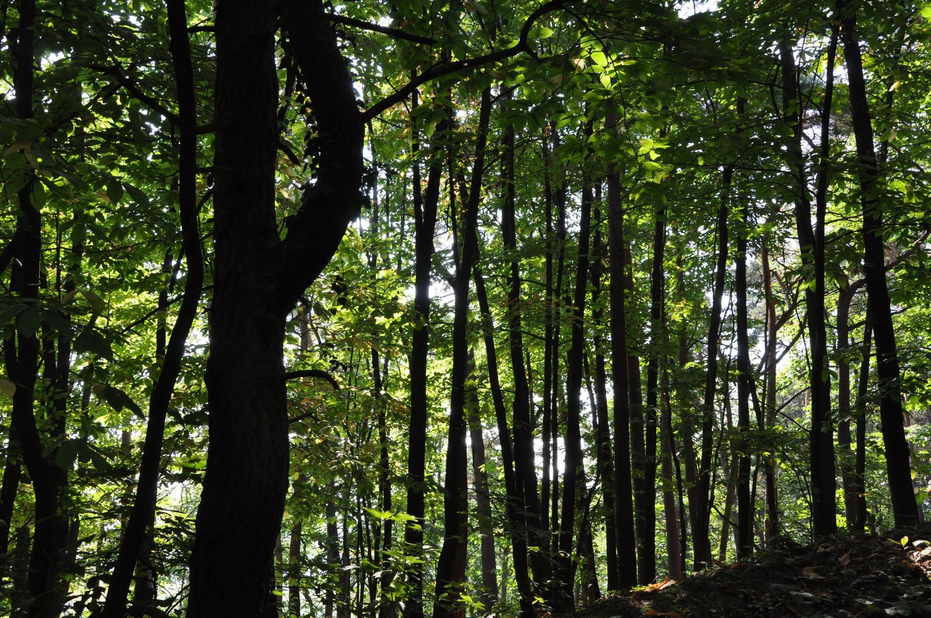 Pfälzer Wald, lichtdurchflutet