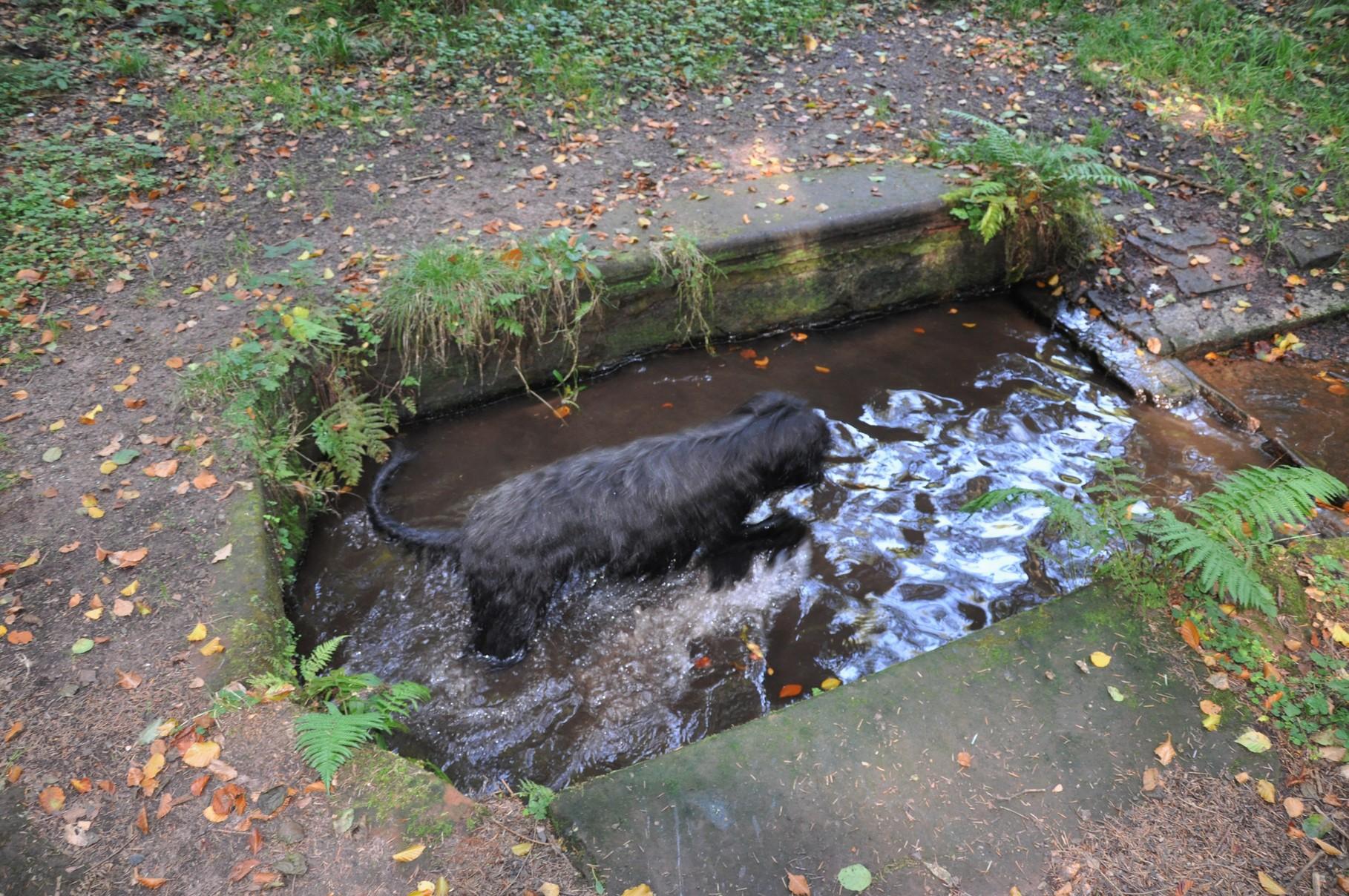 Hundebadewanne mit eingebauter Quelle