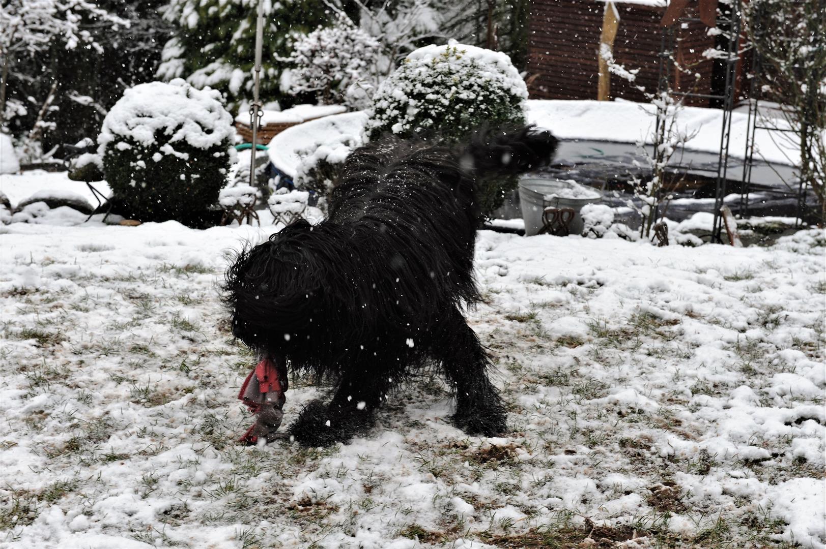 ich kann auf den vorderen Pfoten im Schnee laufen......