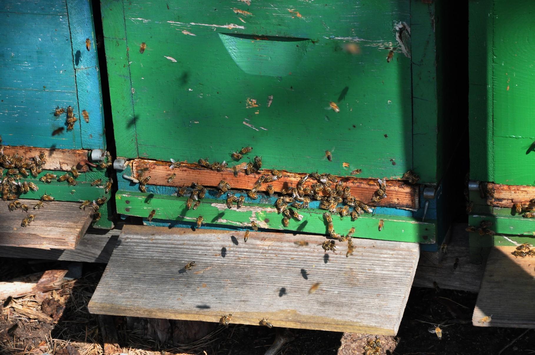 Bienenstöcke noch aktiv....