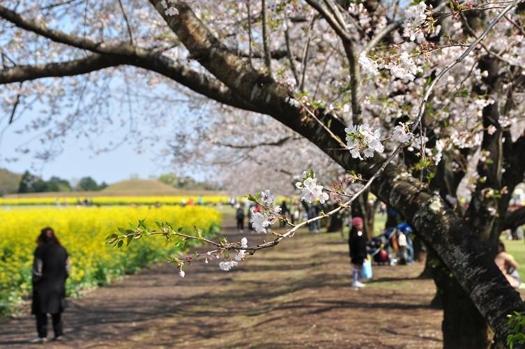 西都原の春