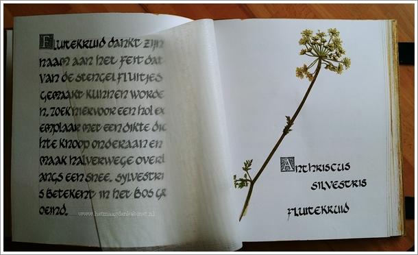 Herbarium kruiden en wilde bloemen  Ellen Brouwers  Ellen Eva Brouwers  www.ellenevabrouwers.com