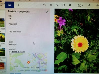 herbarium  determineren  www.hetmaagdenkabinet.nl