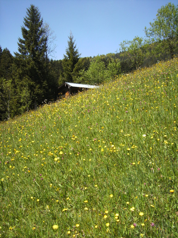Blick zum Bienenhaus, es gibt reilich Nektar