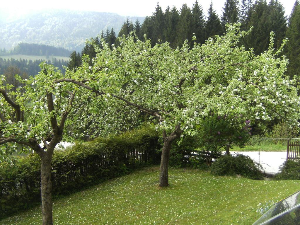 unsere blühenden Obstbäume
