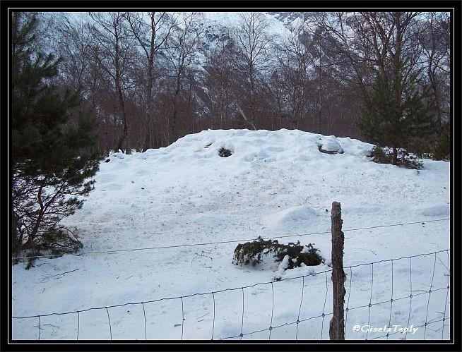 ein verschneites Hügelgrab...