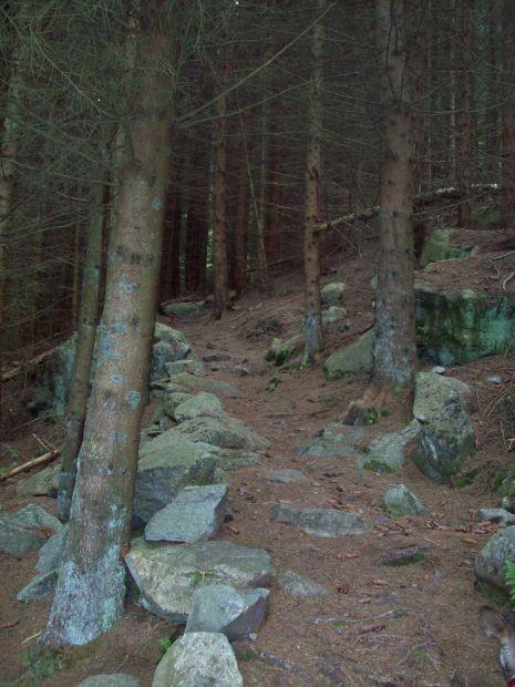 folgen wir eine Zeitlang durch einen Tannenwald