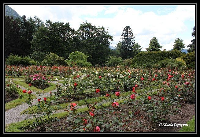 der Rosengarten...
