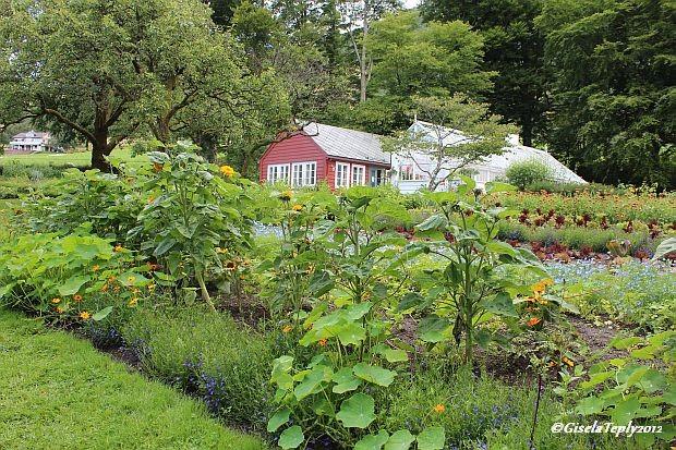 Gemüse, Blumen bunt gemischt....