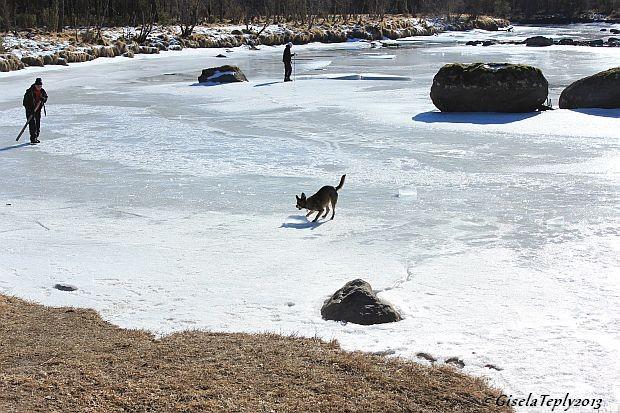 Kira beim Schneeball fangen...