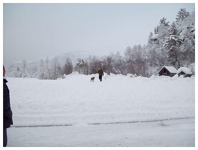 mein Sohn und unser Hund..tollen im Schnee..