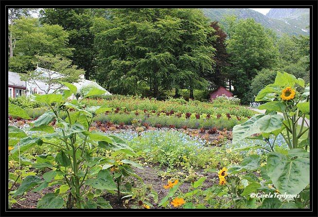 ein Garten wie in früheren Zeiten...