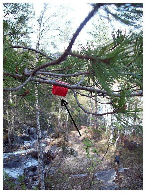 rote Plastikroehrchen..dienen als Wegweiser...