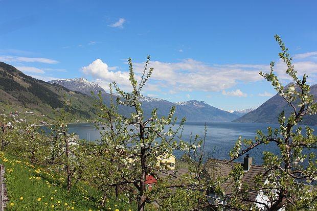 Aussicht über den Sørfjord in Hauso