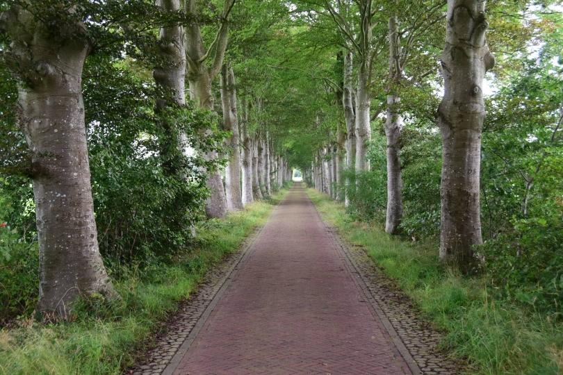 Niederländische Radwege sind ein Traum, nicht nur wenn sie wie hier abseits der Hauptstraßen geführt werden