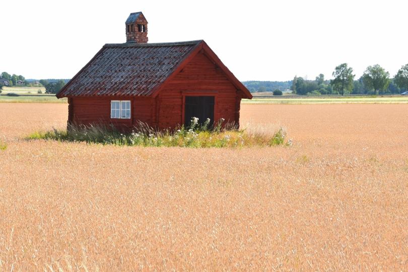 Ein Bett im Kornfeld, aber mit Hütte drum herum. Für dieses Foto bin ich einmal in das Weizenfeld gegangen...