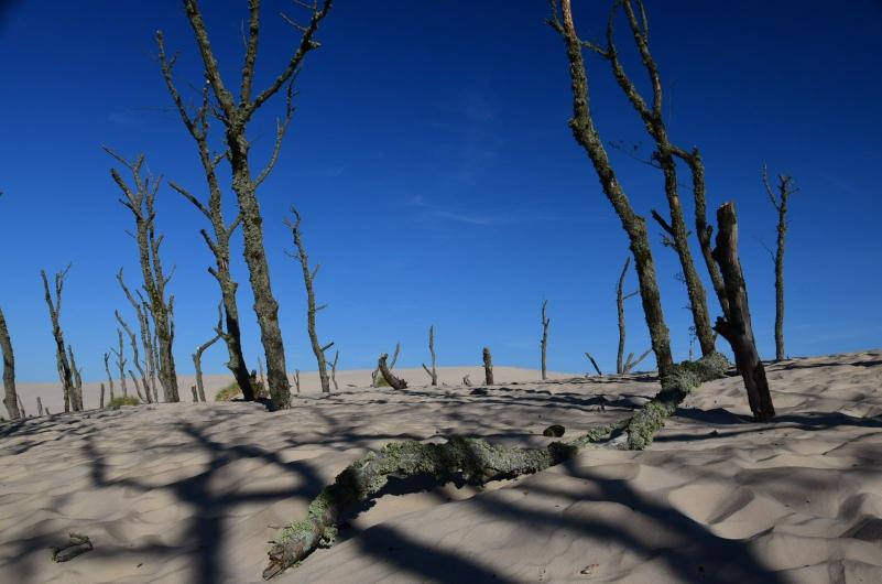Den Wald bringen die Dünen auf ihrer Wanderschaft einfach um