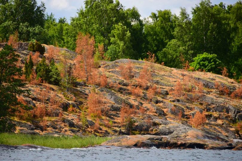 Auch Finnland leidet unter der extremen Dürre dieses Sommers. Seit April hat es nicht mehr richtig geregnet und auf der dünnen Humusschicht über den Felsen vertrocknen die Bäume