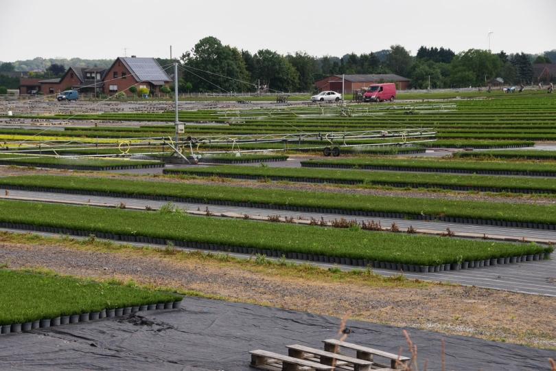 Ich habe den Eindruck, die Gärtnereien hier in der Gegend wollen ganz Deutschland zu einer Heidelandschaft umgestalten