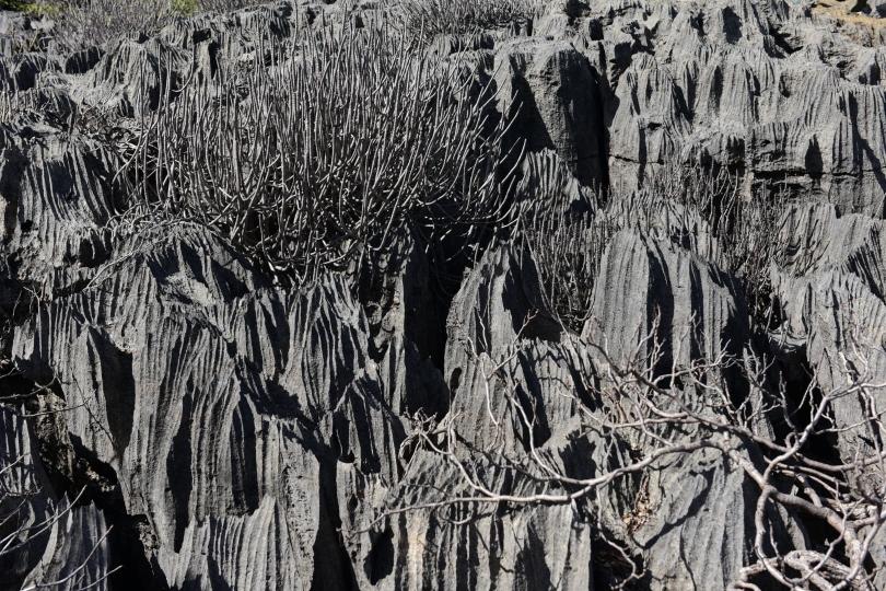Und das sind die berühmten Schwarzen Tsingys - es ist eine Farbaufnahme, einschließlich der Pflanzen