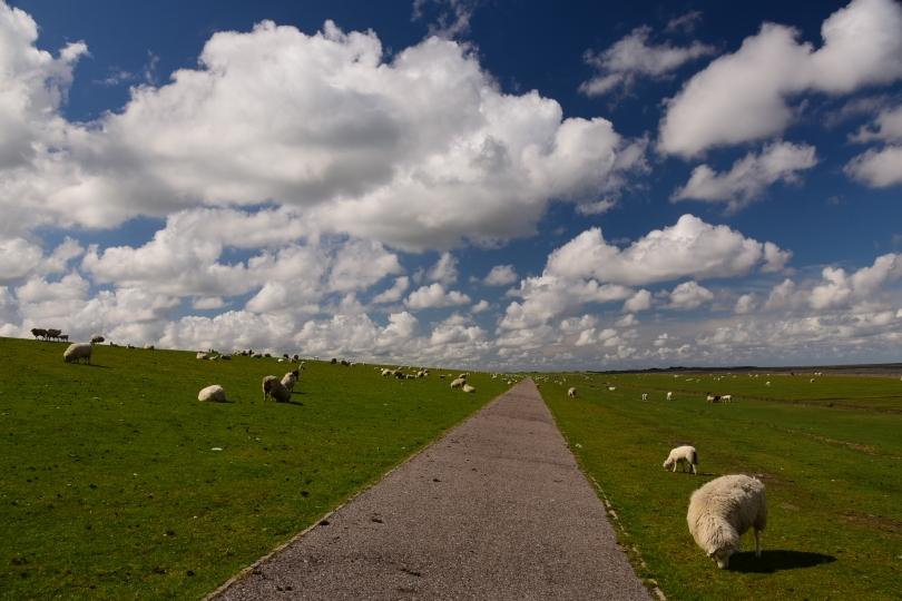 Schafe unten, Schäfchenwolken oben - und das gefühlt endlos