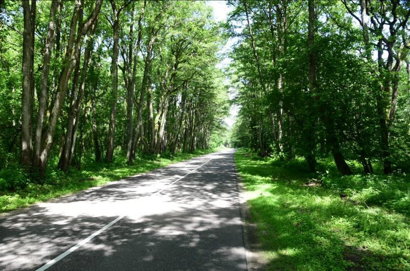 Kiefern- und Erlenwälder wechseln sich mit Sümpfen und Sanddünen ab