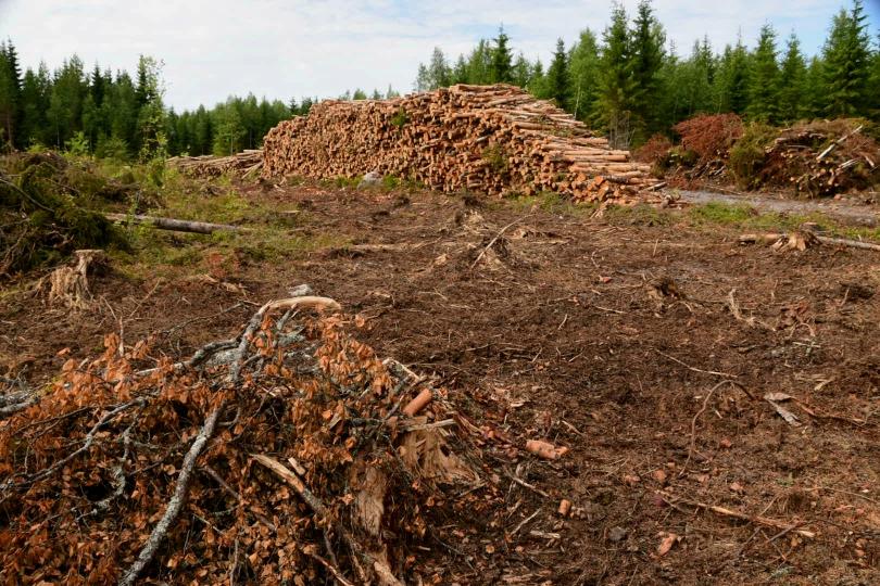 Auch das begeleitet mich spätestens seit dem Baltikum durchgehend - brutale Forstwirschaft, die Mondlandschaften hinterlässt