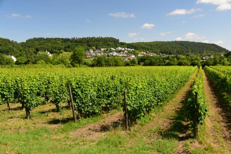 An der Mosel angekommen - im Weinland angekommen