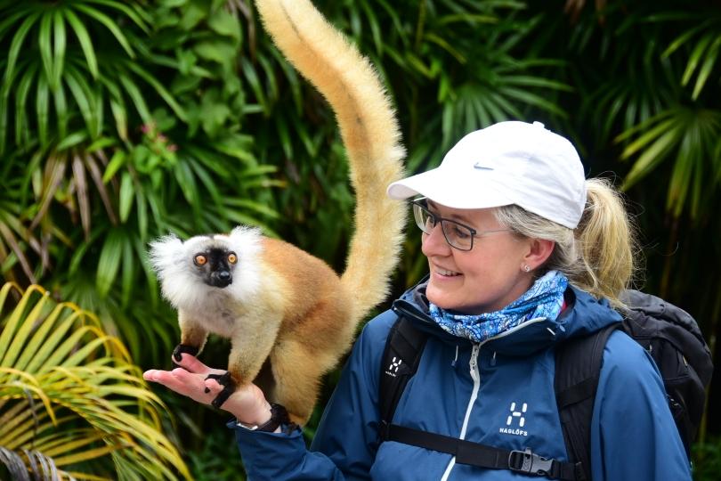 Lemuren sind bestechlich. Für ein Stück Banane tun sie (fast)alles