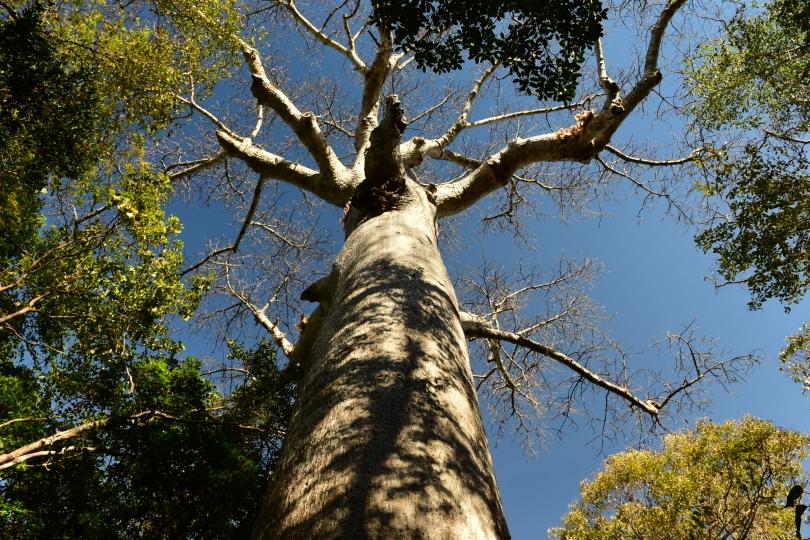 Und auch hier gibt es Baobabs. Der hier ist ca. 800 Jahre alt