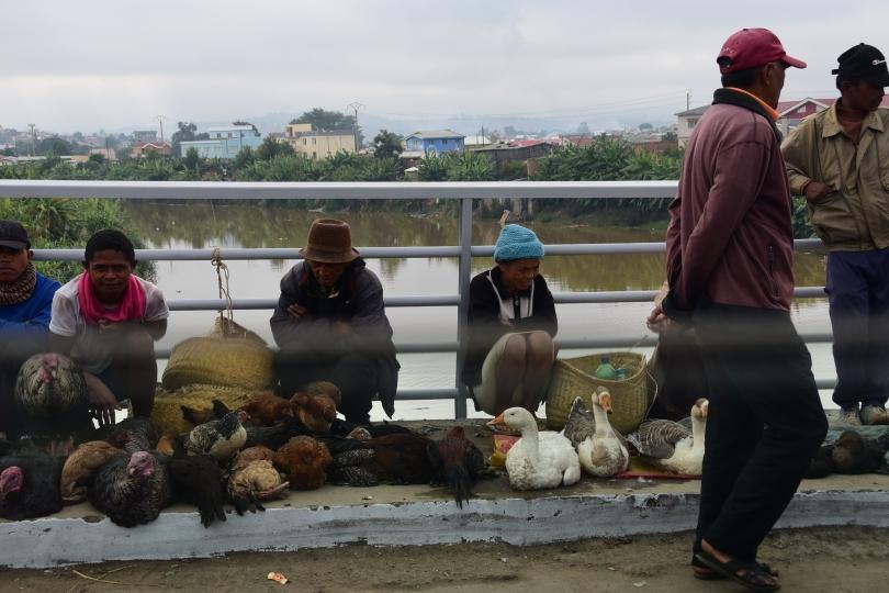 Selbst auf den Bürgersteigen der Brücken wird Lebendes für den Kochtopf angebogten