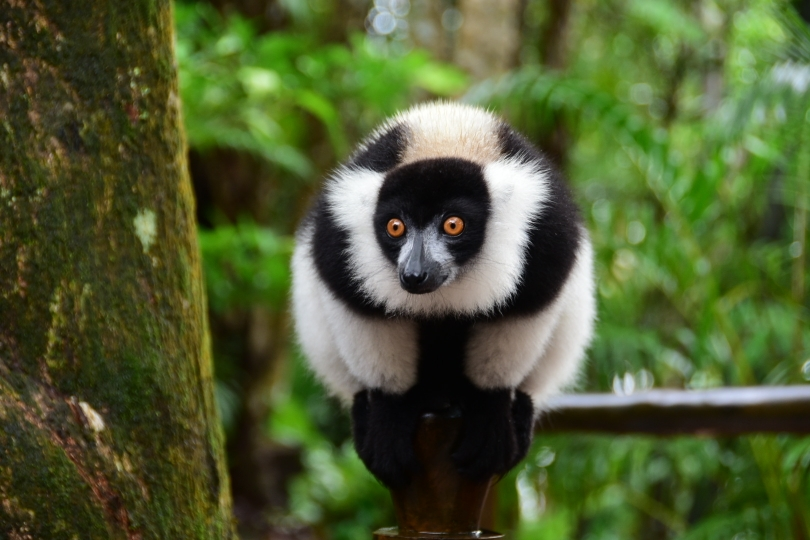 Die Insel der Lemuren - und anderer eigentümlicher Bewohner - ist das Ziel der Reise