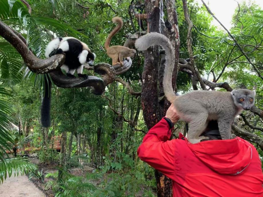 Lemuren verschiedener Arten zu finden ist hier gar nicht so schwer - manchmal finden sie auch den Fotografen