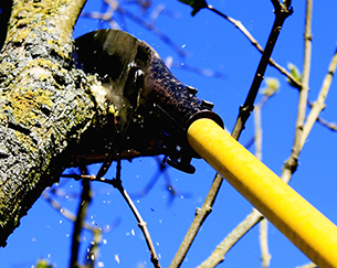 Gehölzschnitt, Baumpflege, Baumschnitt, Geästschnitt